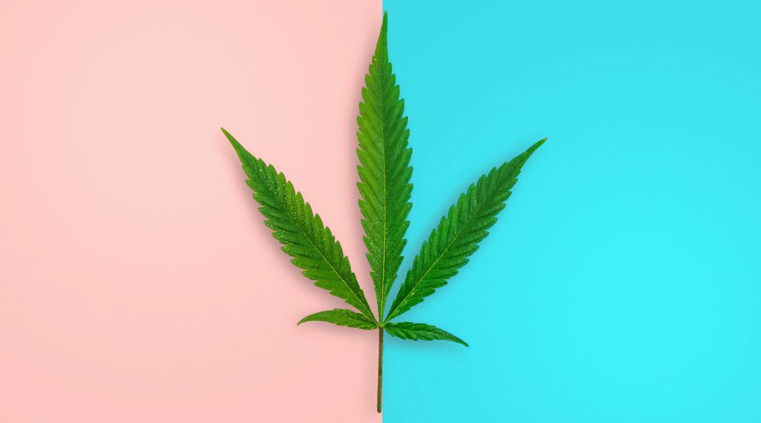 Jak działa marihuana?